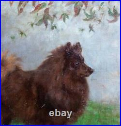 Fine Large 1910 English School Brown Spitz Dog Portrait Signed Antique Painting